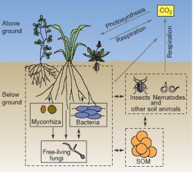 Microorganism ruminations for Soil microbiology