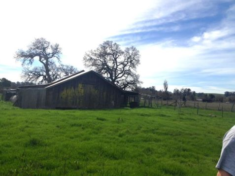 Barn,Pasture,Oaks